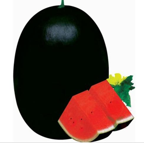 20 بذور / كيس شوقوانغ بذور الخضروات السوداء الطاغية الملك السوبر الحلو البطيخ كبير الثقيلة مكافحة الغلة سوبر البطيخ الحلو