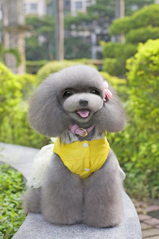 Factory sale dog supplies pet apparel wholesale dog winter clothes female TEDDY dresses 3 colors for girl puppy dog