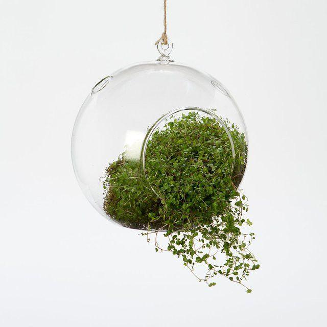 Set of 2 glass hanging plant orb/terrarium,4.5 inch air plant terrarium,indoor  gardening,3 inch glass candle holders,wedding decor - Of 2 Glass Hanging Plant Orb/Terrarium,4.5 Inch Air Plant