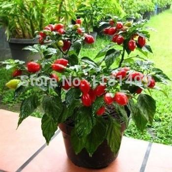 """100+ Fresh Rare """" Habanero Red """" Pepper Seeds Vegetable Seeds * Free Shipping"""