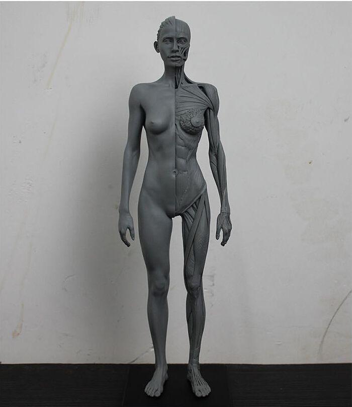 2018 16 30cm Human Female Model Anatomy Skull Head Muscle Bone