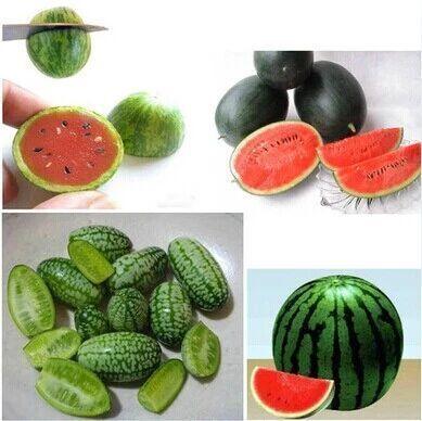 Neue Obstsamen, Mini-Wassermelonensamen, Multi-Colord-Wassermelonensamen, familie kleine Obstgarten 10 stücke