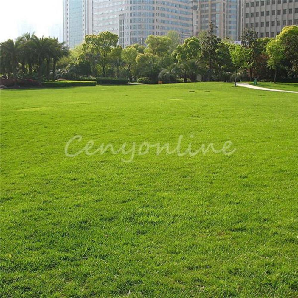 1000pcs 높이 Fescue 녹색 잔디 씨앗 Festuca Arundinacea 잔디 씨앗 Z79
