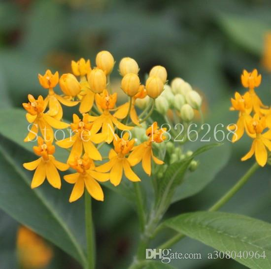 60 pcs Garden Balsam seeds showy balsamine Impatiens flower seeds potted flowers Outdoor plant