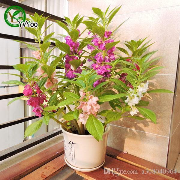 MIX Impatiens Seeds Flower Pot Planters Garden Bonsai Flower Seed 50 Particles / lot P015