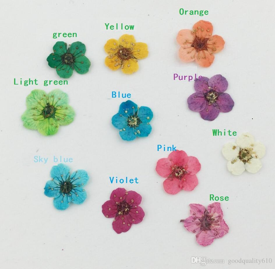 100pcs Pressed Dried Plum Blossom Flower Plant Herbarium For Times Gems Jewelry Pendant Rings Earrings Flower Making Accessories