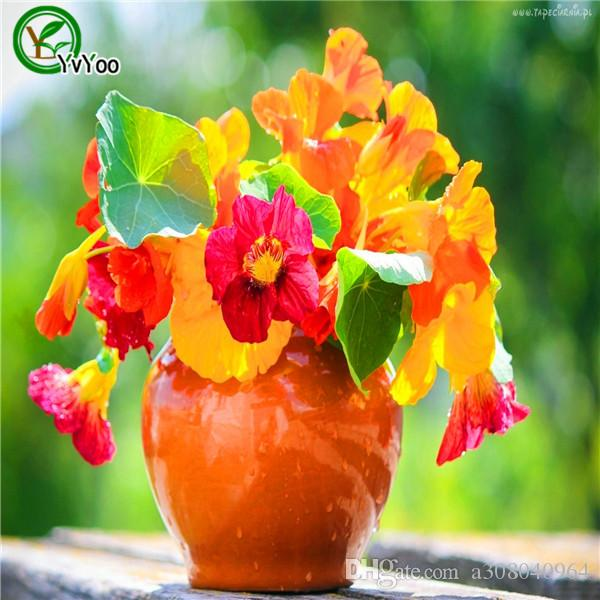 Mix Tropaeolum majus graines Pot de fleur Jardinières Jardin Bonsaï Graine de fleur 30 Particules / lot L096
