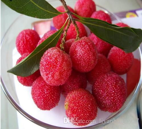 particles / bag arbutus unedo strawberry tree delicious, Beautiful flower
