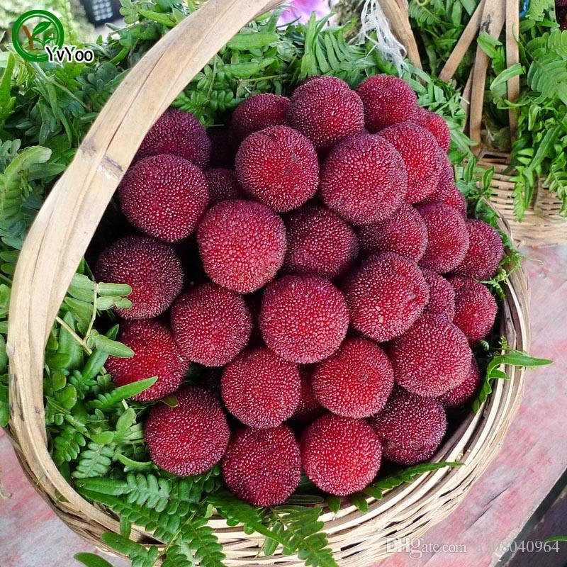 Vegetables and fruit UK seeds Red bayberry seeds Bonsai plants Seeds for home /&
