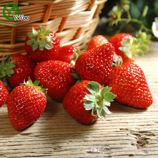 100pcs graines de fraise plantes de jardin Bonsaï semences de fruits et légumes biologiques E018