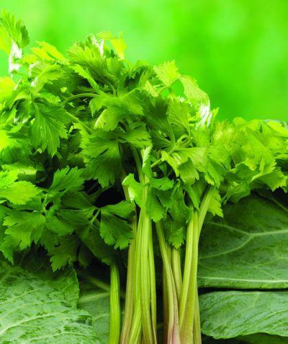 Aipo Apium Graveolens Sementes Vegetais, 100 Sementes T017