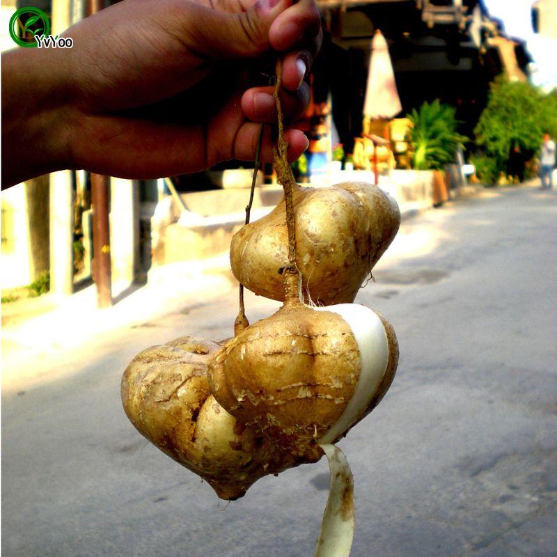 Pommes de terre douces plantes jardin Graines Bonsai fruits et graines de légumes 30 pcs D03