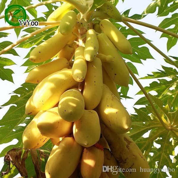 Bonsai plant Yellow Gold Papaya seeds Delicious Fruit, Seeds Unique Very RARE garden decoration plant 50pcs A012