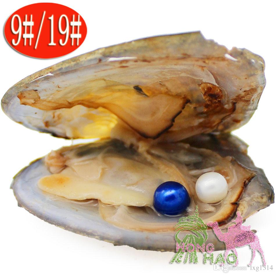 1*Freshwater Wrapped Akoya Oysters with Large 6-7mm inside Gifts Bulk NEW//
