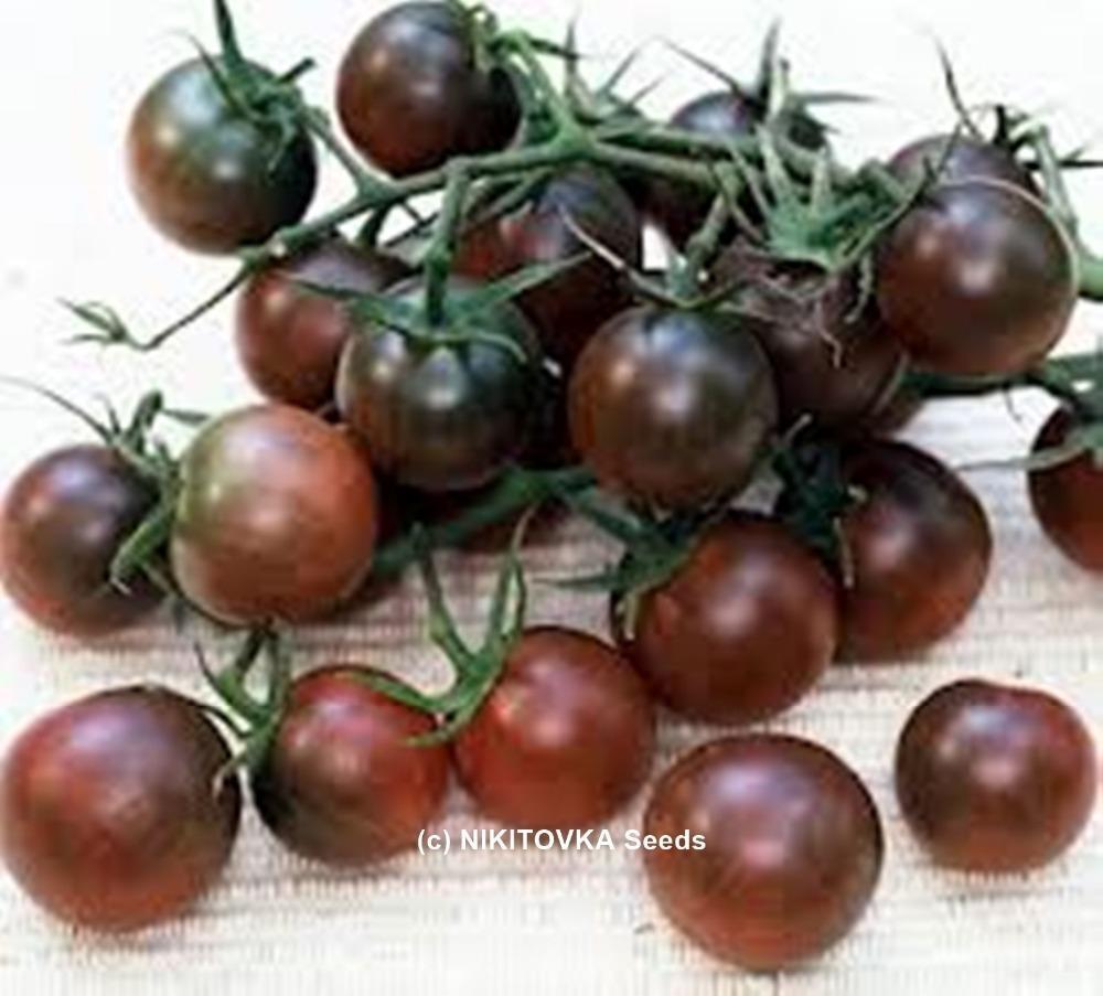 Graines rares Tomate Noir Cherry Russe Heirloom Graine de légumes 50pcs S027
