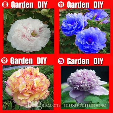 Wholesale - China's Peony Seeds Paeonia suffruticosa Tree 4 colours see picture 80 seeds. Separate,you will get 4 bags Free shipping