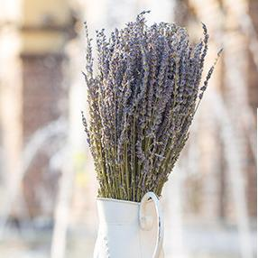 Nouveau gros naturel Fleur Uk Fleurs séchées lavande séchées pour la maison de soirée de mariage Décoration artificielle vraie fleur