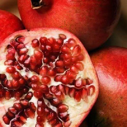 과일 씨앗 석류 씨앗 punica granatum 붉은 나무 씨앗 t009