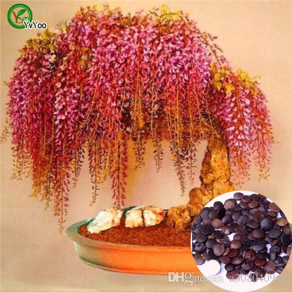 Bonsai Flor Wisteria sementes em vasos planta misturada cor jardim sementes de flor O023