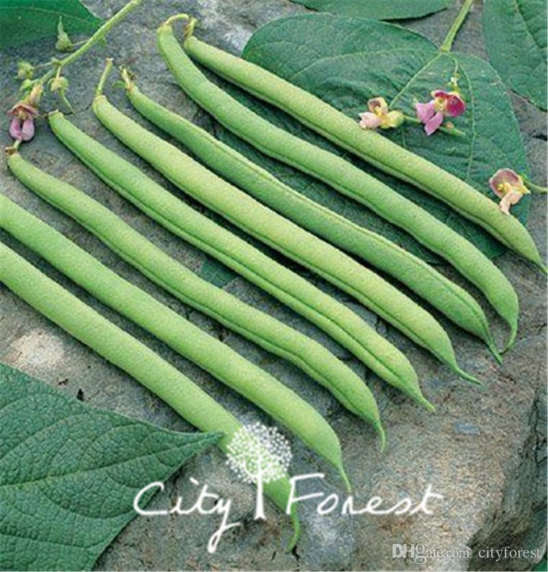 Haricots verts légumes 50 graines / Sac haricots verts Bush haricots grimpants Facile à cultiver eirloom semences de légumes délicieux