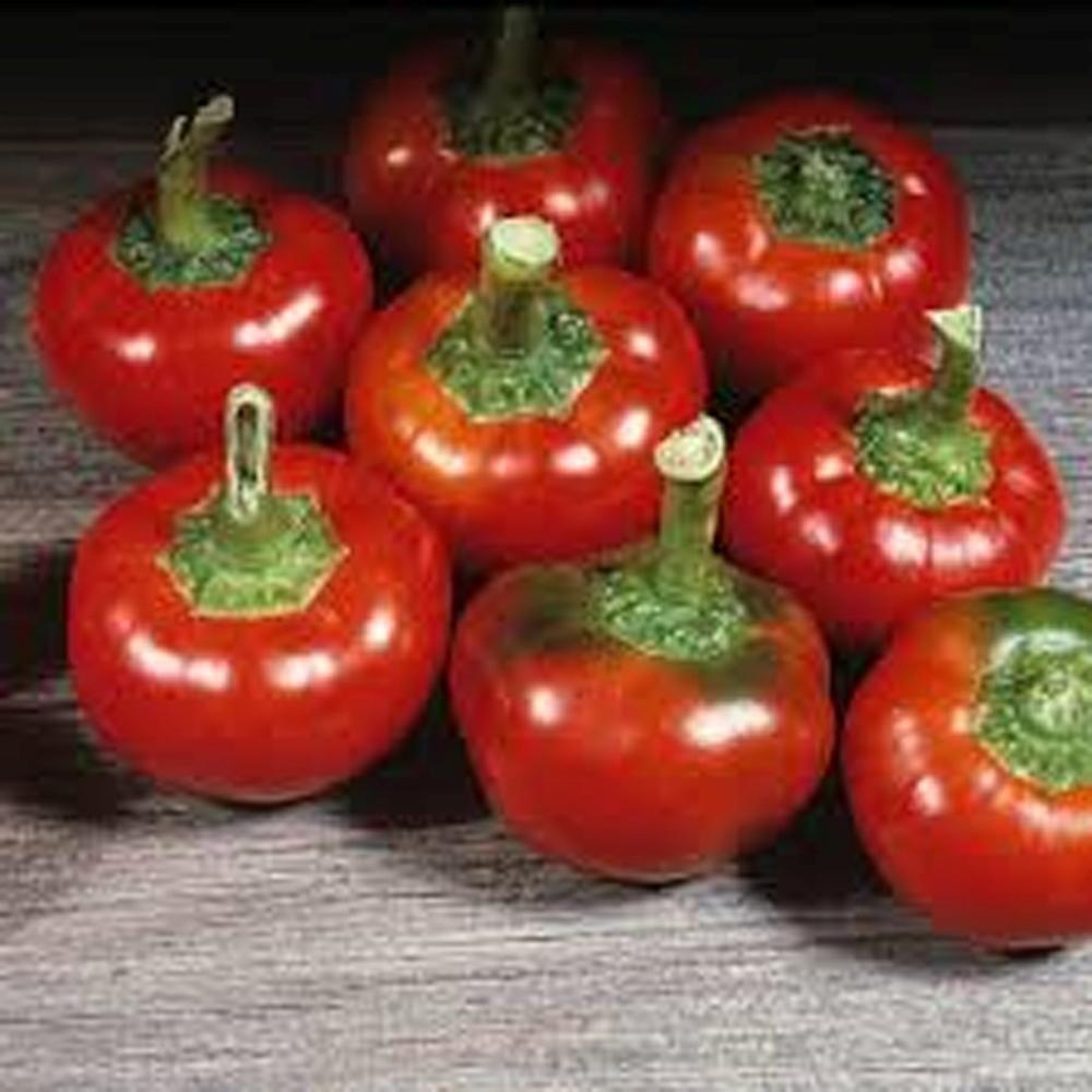 Hot Chilli Pepper-Large Red Cherry 30 graines-Vendeur Britannique