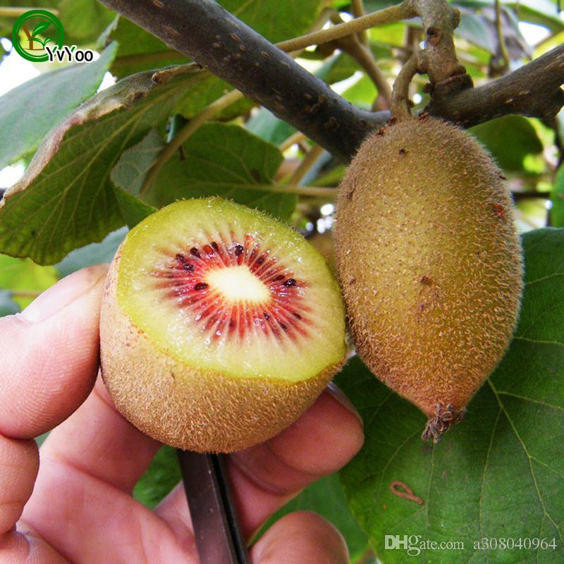 Kiwi Seeds garden plants Bonsai organic fruit and vegetable seeds 100 pcs g009