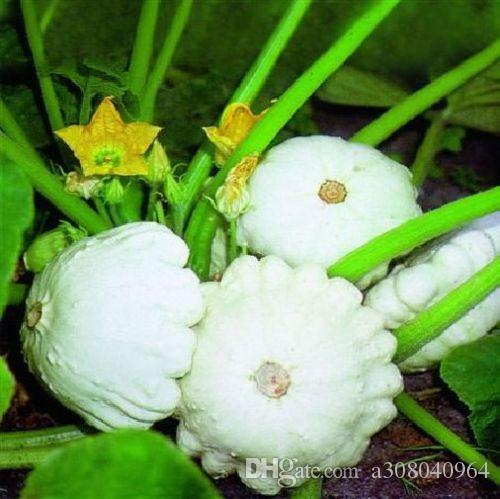 Pumpkin seeds Vegetable - Summer Squash seeds Custard White garden decoration plant 20pcs A62