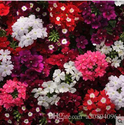 10pcs / bag 아름다운 벚꽃 꽃 씨앗, 꽃은 좋은 행운을 가져올 수 분재 식물 씨앗