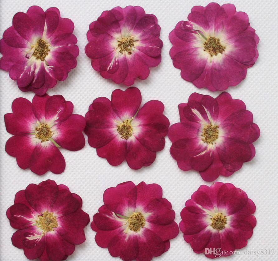 Tip-1 250pcs Basın Craft DIY Aksesuarları Yapımı Epoksi Reçine kolye kolye Takı için Burgonya Gül Kuru Çiçek Bitkileri Kuru preslenmiş