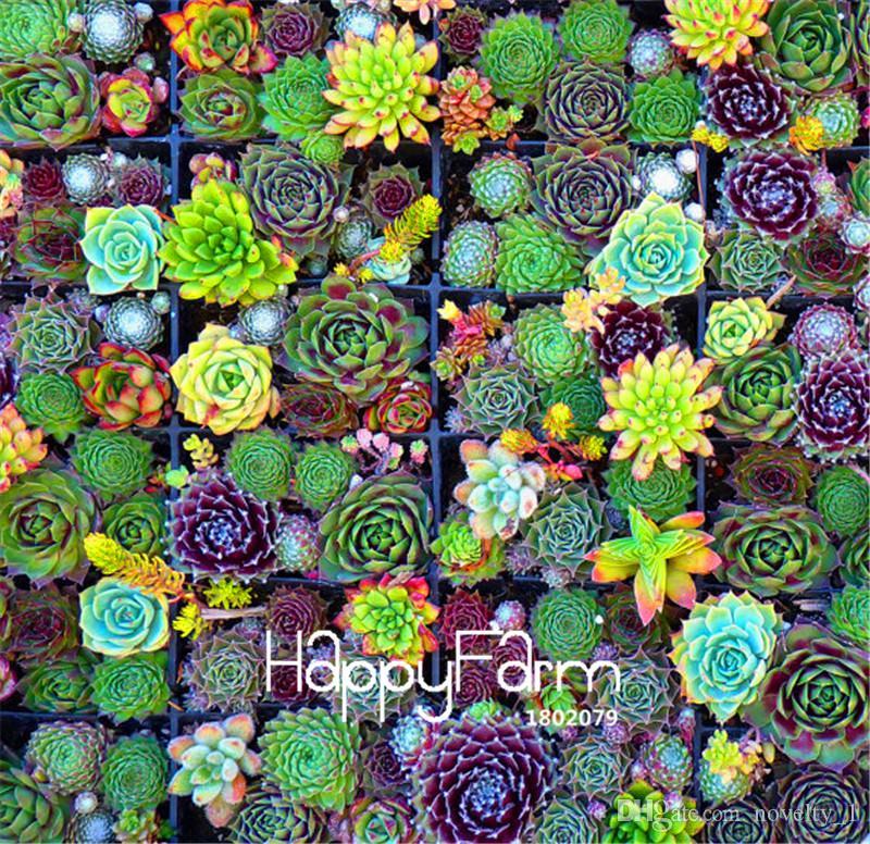 100 pezzi / borsa best-seller! Succulente semi di cactus loto lithops piante bonsai casa giardinaggio vasi da fiori balcone seme di fiore