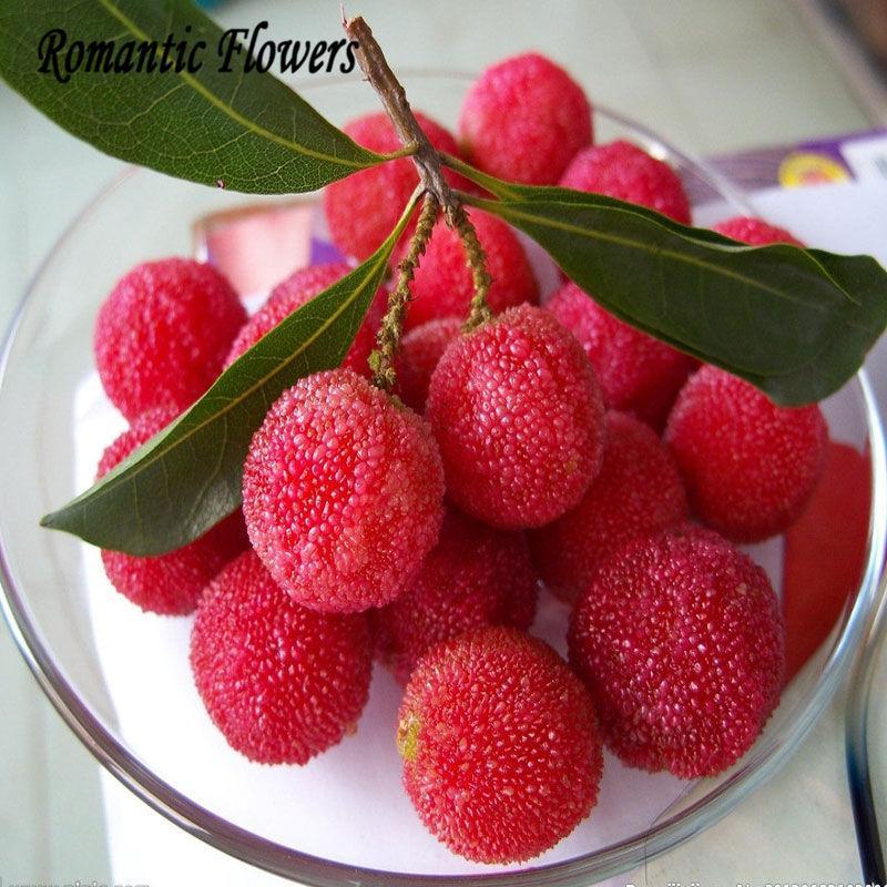 Wholesale10 Arbutus Unedo Erdbeerbaum Köstliche chinesische Frucht Samenpflanze Bonsai