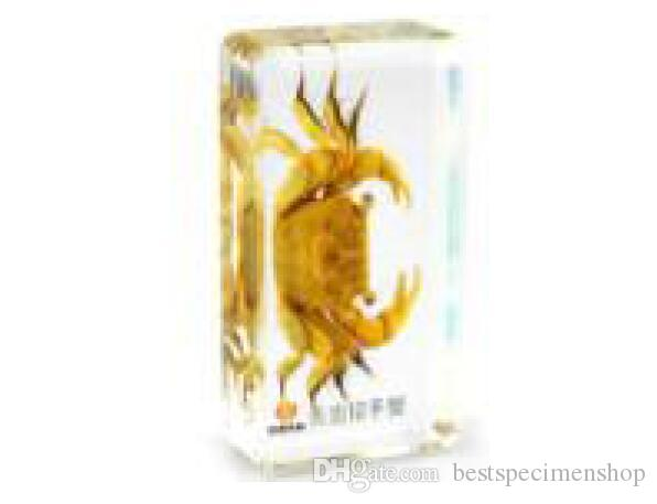 Yellow Crab Specimens In Lucite Paperweight//Collection