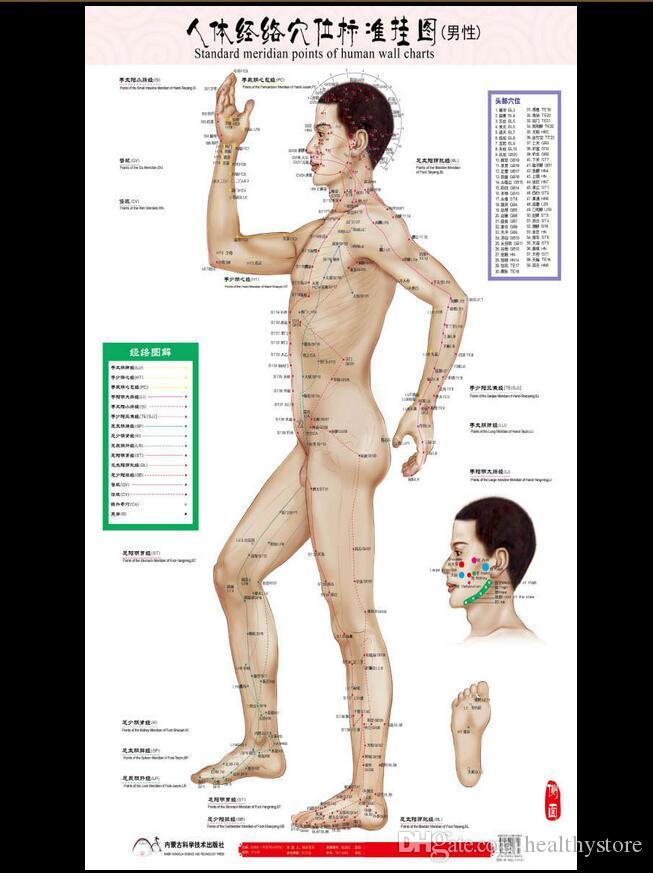 Online Cheap Standard Meridian Points Of Human Wall Chart Female ...