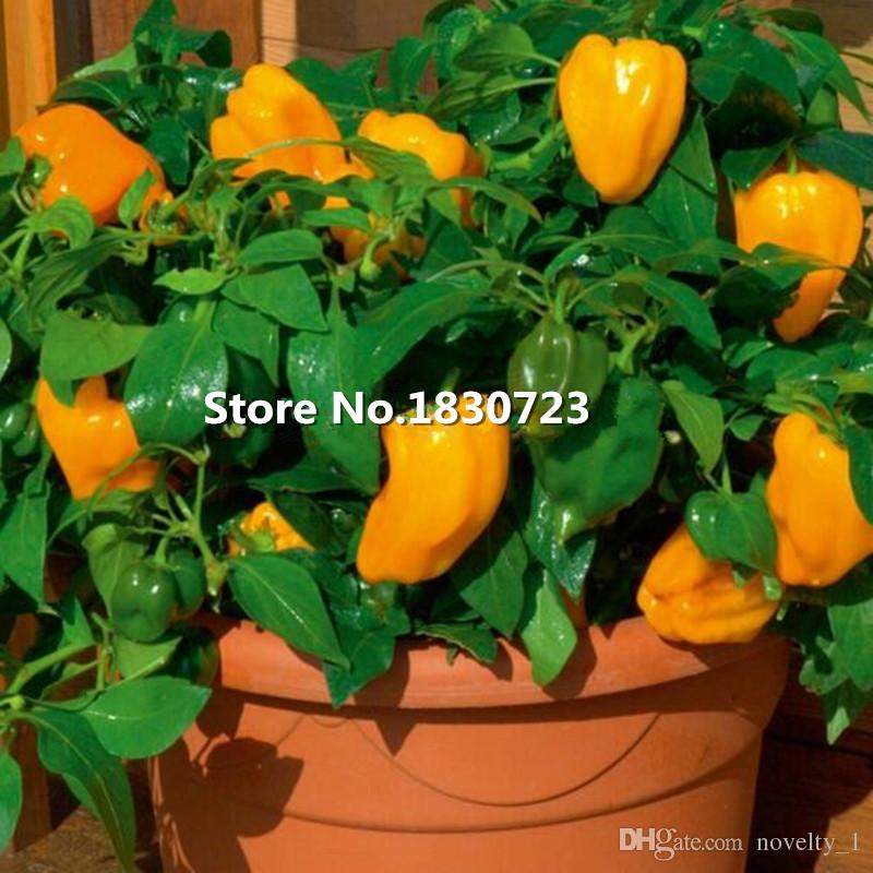 50 seeds/pack Home Garden Plant,orange sweet bell peppers,Mohawk Sweet Pepper vegetable seeds,Free Shipping