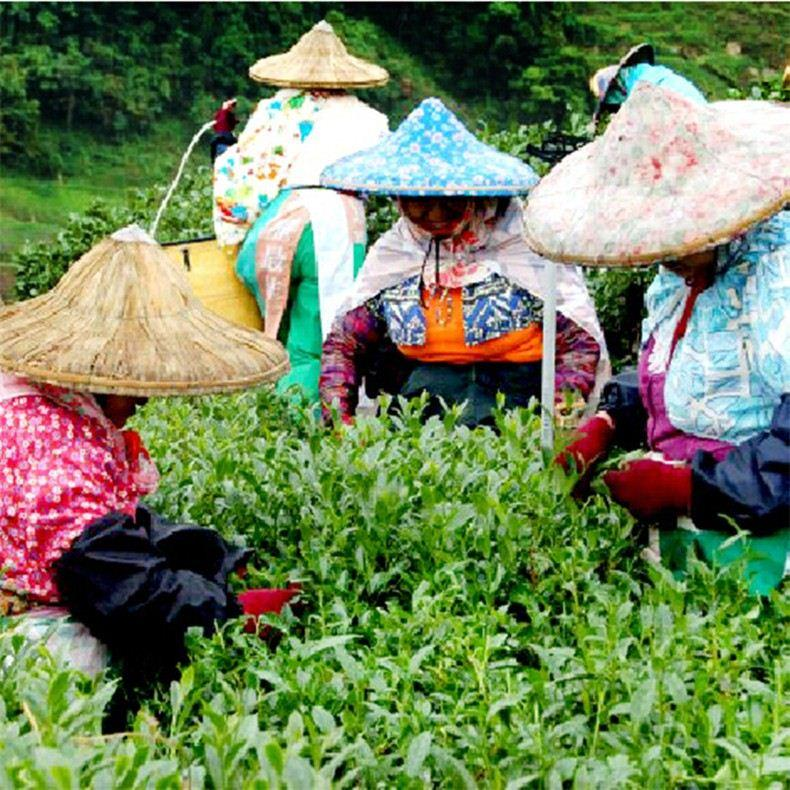 Green-Food-250g-Chinese-Taiwan-Beauty-Weight-loss-Lowering-Blood-Pressure-High-Mountains-JinXuan-Milk-Oolong (4)
