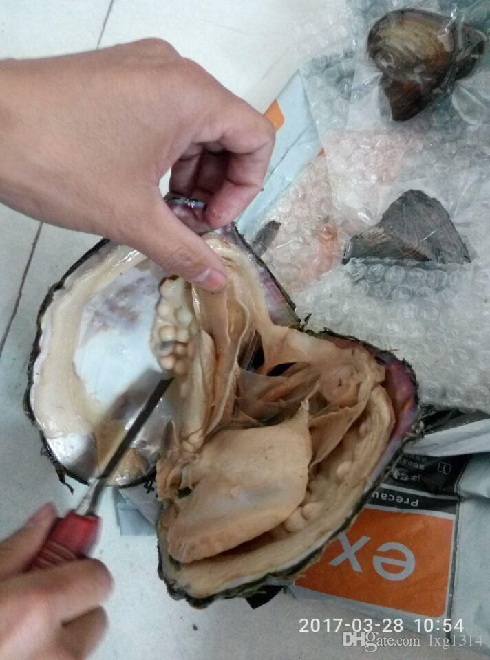 delievery bugün bir kez ödemiş ücretsiz kargo ücreti fedexip2-5days tarafından göndermek vakum stok tatlı su akayo inci istiridye Canavar Oyster