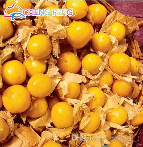 New Arrival 100 Seeds Home Garden Ground Cherry Physalis Pubescens Golden Strawberry Lantern fruit Vegetable Seeds Free Shipping