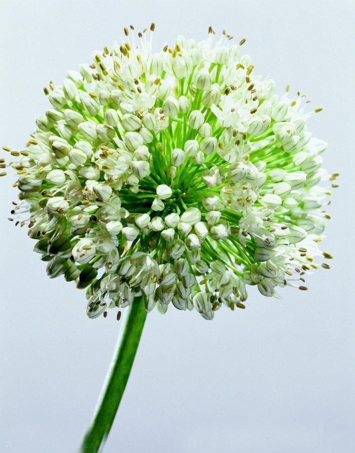 Где купить цветы в горшках семена лук доставка цветов краснодар флора
