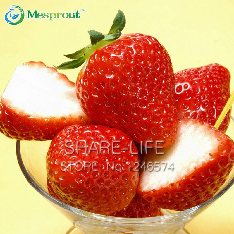 50 PCS Strawberry Seeds Patio Y Jardín En maceta Rojo Plantas de fresa Flores Frutas Semillas