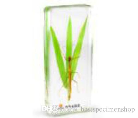 Mimesis of Stick Insect Specimen Acrylic Resin Embedded Insect Transparent Mouse Paperweight Student Biology Science Learning&Education Kits