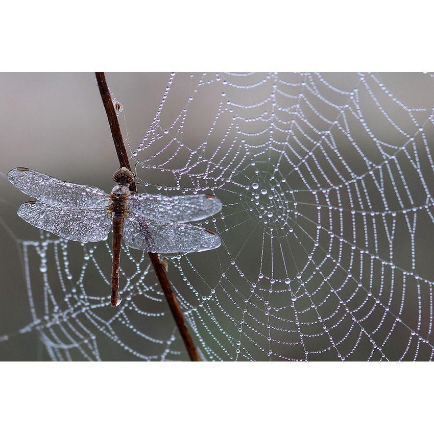Libellule Spider Web DIY Diamant Peinture Broderie 5DBeauty Point De Croix Cristal Carré Finish Home Chambre Mur Art Décor Artisanat Cadeau