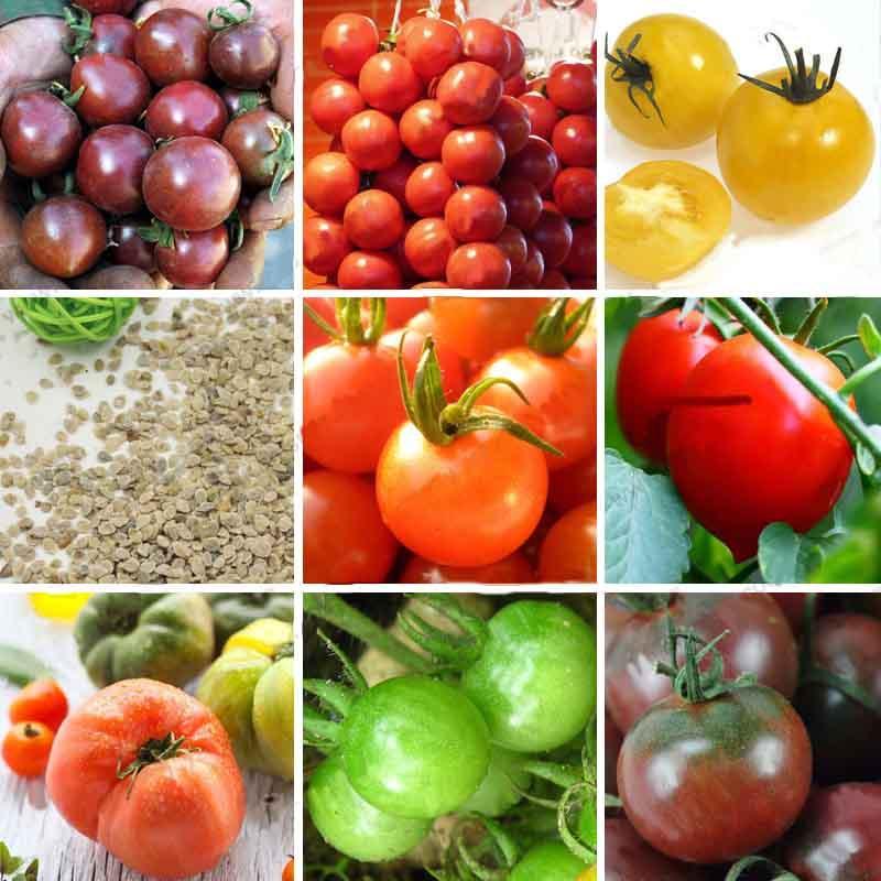 12 tipi di semi di pomodoro balcone frutta semi di verdure in vaso bonsai piante di semi di pomodoro un pacchetto 100 pezzi