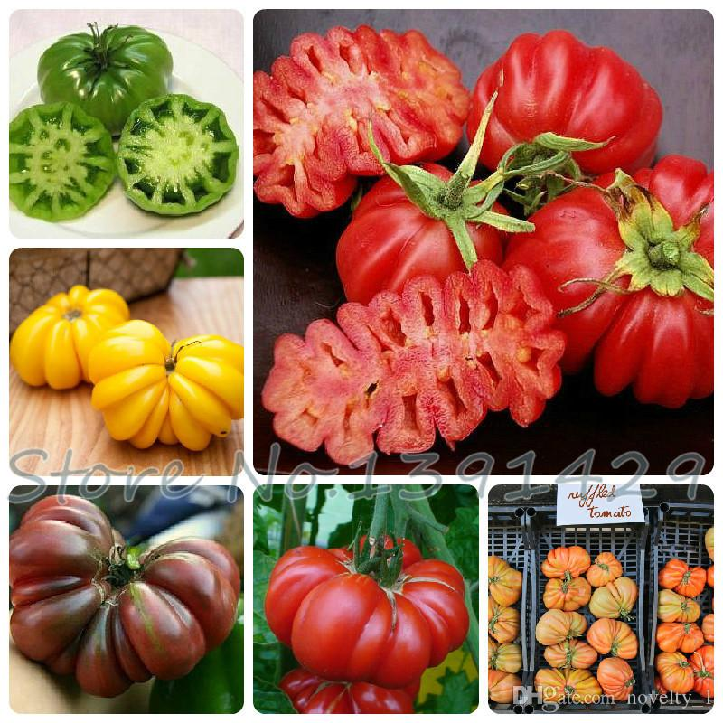 Vegetables seeds Tomato 'Marmande' RARE Seeds - 100 TOP Quality Seeds, household gardening DIY, free shipping!