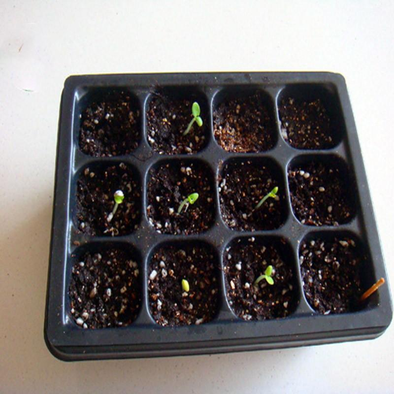 New-Useful-Durable-12-Cells-Hole-Plant-Seeds-Grow-Box-Tray-Insert-Case-quality-plastic-Plant (5)