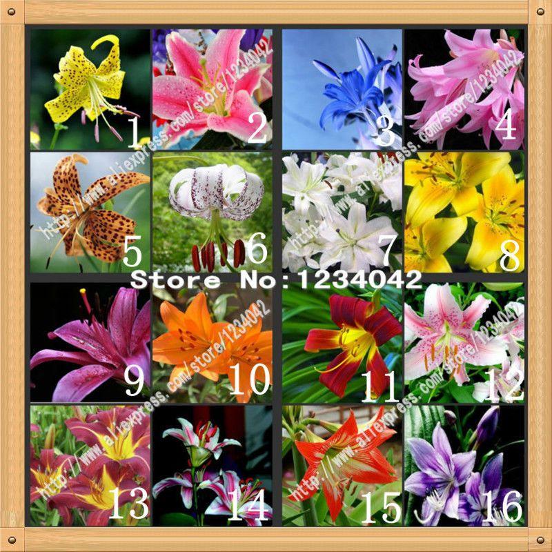2020 Wholesalesenior Perfume Lily Seed 24 Varieties Garden