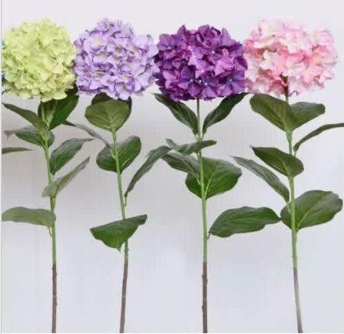 wholesale100 Гортензия семена цветов Случайные 24 Kindplant бонсай