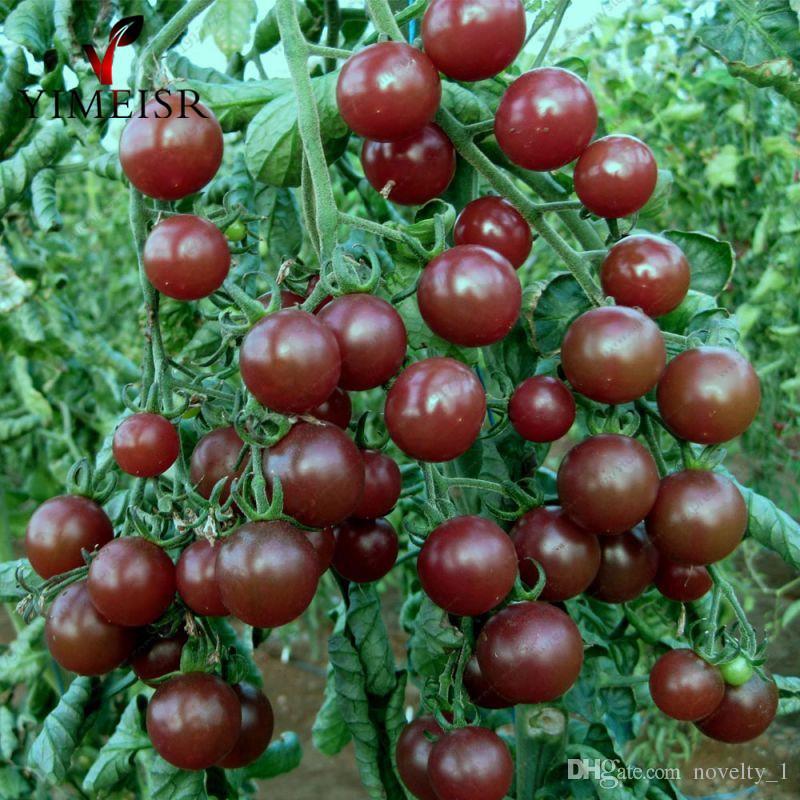 50 Pcs / sac Graines De Cerise De Cerise Noire Balcon Fruits Biologiques Graines De Légumes En Pot De Bonsaï Des Graines De Tomate Pour Le Jardin À La Maison