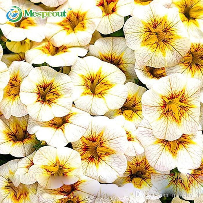 Neuankömmling! 200 STÜCKE Seltene Gelbe Calibrachoa Petunia Jährliche Blumensamen Große Blühende Blume Garten Heim Bonsai