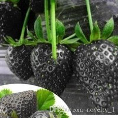 100 PCS Fruit Seeds Black Strawberry Seeds Bonsai Plants Seeds For Home & Garden Pot Garden Fruit and Strawberries