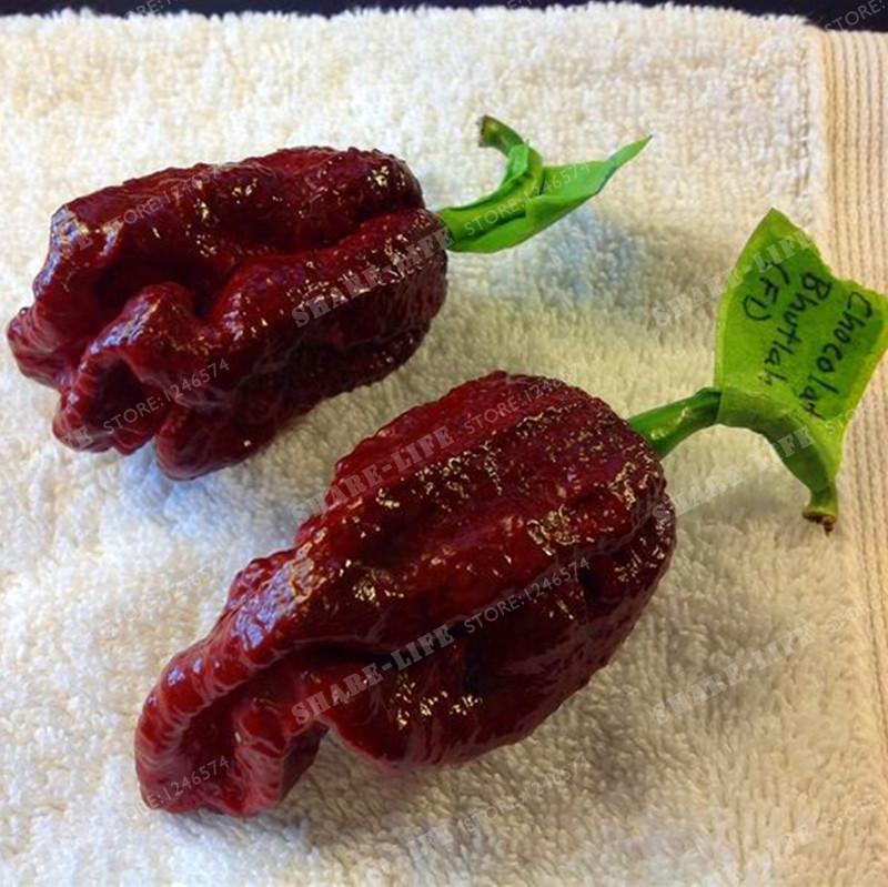 100PCS The Devil Pepper Seeds, el chili más picante del mundo, 100% de semillas frescas, envío gratuito de verduras, plantas de jardín, productos para el hogar